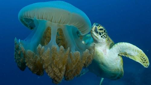 Australia dives