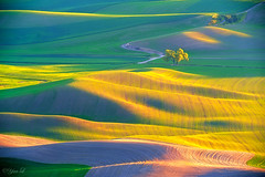 Dusk at the Palouse (Yan L Photography) Tags: sunset color texture nature field sunrise washington spokane butte northwest farm farmland land wa palouse steptoe