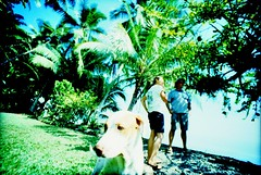 IMG_0036 (spoeker) Tags: dog animal fauna analog 35mm garden lomo xpro lomography costarica wide slide dia hund analogue botanicgarden garten kb tier planzen botanischergarten golfito golfodulce lcwide