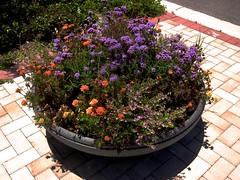 Big Bowl of Flowers (LarryJay99 ) Tags: flowers plants brick canon pattern outdoor blossoms sunny places westpalmbeach powershot sidewalk pottedplants blooms 50200mm paversnorthwood ilobsterit
