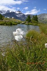 DSC_6372 (champmol) Tags: schweiz suisse mutti wallis brig simplon vallais simplonpass gondo stockalperweg juli12 besuchmutti