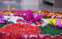Floral decoration. (Krish | ) Tags: india flower floral festival nikon kerala celebration flowerarrangement onam rangoli krish d60 pookkalam