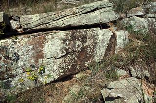 Western Diamond-backed Rattlesnake - Den Site