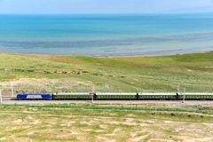 7582 near Qinghai lake () Tags: china lake digital train tren trenes eisenbahn railway zug  fx treno  ferrocarril ferrovia d600   chinarailway skyroad    chinatrain