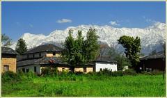 Unforgettable Himachal (mala singh) Tags: india mountain snow village ranges valley himalayas himachalpradesh kangra dhauladhar