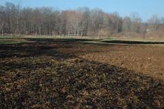 """Burned Ground <a style=""""margin-left:10px; font-size:0.8em;"""" href=""""http://www.flickr.com/photos/91915217@N00/13943189945/"""" target=""""_blank"""">@flickr</a>"""