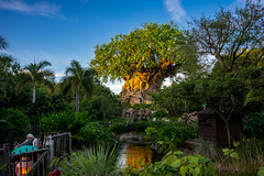 Animal Kingdom - Happy B(Earth)day (Cory Disbrow) Tags: wdw waltdisneyworld animalkingdom sonya7
