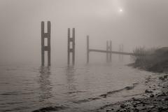 mist on the river (stevefge (away travelling)) Tags: blackandwhite mist netherlands nederland rivers beuningen waal nederlandvandaag reflectyourworld