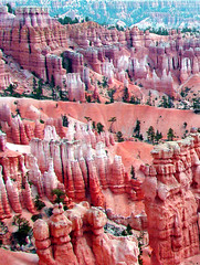 In the Pink, Bryce Canyon, UT 9-09 (inkknife_2000 (6.5 million views +)) Tags: trees usa southwest landscapes utah spires nationalparks hoodoos brycecanyonnationalpark redsandstone junipers redrockcliffs