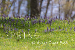 Spring is Here (Denise @ New Mercies I See) Tags: home nature outdoors spring may westvirginia appalachia 2016 onethousandgifts