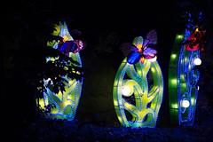 _DSC9630_2 (Elii D.) Tags: light fish flower animal night zoo monkey neon dragons lantern lampion dargon
