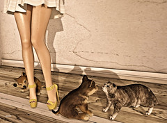 Fight like cat and dog (Elemiah Choche) Tags: breathe bueno jian maitreya