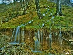 Agua va (Alfer520) Tags: paisajes naturaleza musgo verde nature hojas landscapes agua arboles bosque troncos piedras ramas alfer520