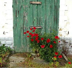 Lost (Noemie.C Photo) Tags: door flowers red plants naturaleza house green nature fleurs lost rouge vegetable vert peinture poppies porte maison plantes abandonn coquelicots