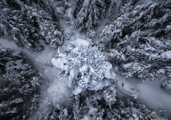 A Pine from above (Freddy Enguix) Tags: landscape beautiful beauty branches bridge cold covered europe forest freddyenguix from frost ice mountain nature over peace peaceful peak pine powder sattel scenic season sky snow snowy switzerland top tree view white winter