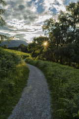 Sunset - Tarn Hows - U.K. (shellyparente) Tags: trees sunset england green nature landscape outdoor path cumbria
