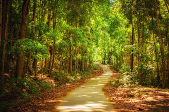 The pathway (Hendraxu) Tags: road travel plant tree green nature sunshine forest asia philippines bohol pathway