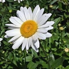 Flower (pmarella) Tags: flower jerseycity pmarella riverviewpkproductions