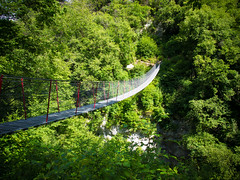 P6218533 (zullo_stefano) Tags: bridge italy mountain green nature forest trekking olympus verona tre zuiko e5 valsorda tibetanbridge olympuse5