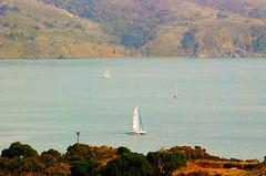 DSC_6649 - Copy (digifotovet) Tags: sanfrancisco california bay boat sail