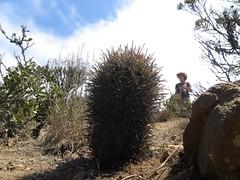 DSCN8503 (Robby's Sukkulentenseite) Tags: chile cactus cacti coquimbo heike reise kaktus kakteen eriosyce standort subgibbosa frayjorge neoporteria nigrihorrida vortrag1 ka4151s