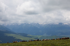 Xinjiang:kalajun grassland (woOoly) Tags: china spring xinjiang prairie  kazakh ili yili sinkiang  alpinegrassland   kalajungrassland ilichina tekesi kalajunprairie
