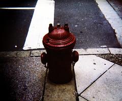 hydrant (Meganotravels) Tags: travel philadelphia hydrant holga pennsylvania firehydrant philly