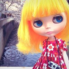 I love cherry blossom and Blythe! #blythe