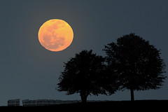 Perigee Big Moon (Carlos Gotay Martnez) Tags: trees sky moon field silhouette fence horizon moonrise perigee supermoon perigeefullmoon
