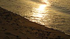 IMG_5412 (Martina Mastromonaco) Tags: beach vineyard martha s subset