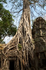 Encroaching (Geoff Main) Tags: tree temple ancient cambodia roots angkor taprohm canonefs1022mmf3545usm canonef24105mmf4lisusm canon7d tombraidertree khmercivilisation