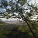 Eastern Serengeti_2012 05 31_2996