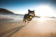 """FETCH!!!"" (Folk