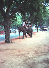 Elephant Bus Service Tees January Marg Janpath Road Area Motilal Nehru Marg Area New Delhi 110011 India Feb 1990 110 (photographer695) Tags: india elephant bus service tees january marg janpath road area motilal nehru new delhi 110011 feb 1990