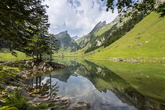 Like A Mirror (PhiiiiiiiL) Tags: mountain lake reflection tree green mirror schweiz switzerland nikon hiking swiss spiegel berge grn mountainlake bergsee bume spiegelung appenzell wanderung sntis alpstein wasserauen seealpsee innerrhoden visipix d800e