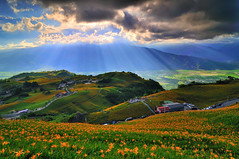 Rays From Heaven, (Vincent_Ting) Tags: sky star taiwan daylily  formosa  sunrays  milkyway hualian    hemerocallisfulva       clousd   starstrails