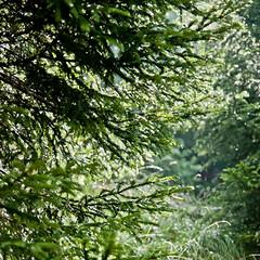 (db | photographer) Tags: france color tree green forest square nikon bokeh vert fir savoie tamron foret arbre couleur sapin pdc deepoffield carre albiez d80 profondeurdechamp 1750mm nikond80 albiezmontrond damienbottura bottura tamronspaf1750mmf28xrdi adobelightroom35 adobephotoshopelements10
