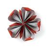 Passiflora Star