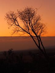 Mil ramas (one) (Lilian Britez) Tags: nube tarde ramas arbustos paraguari