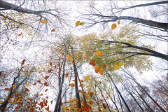 floating leaves (Sandra Bartocha) Tags: autumn fall forest herbst wald beechtrees buchen fallcolour sandrabartocha