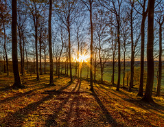 Short Days, Long Shadows (Baggers 2013) Tags: uk blue autumn trees sunset sky sun sunlight cold tree nature field leaves horizontal landscape outdoors photography gold golden cool day dusk bedfordshire windy nopeople flare tranquilscene sunstar longshadows beechtrees ancientwoodland ruralscene beautyinnature colourimage leefilters flickrchallengegroup flickrchallengewinner chalkescarpment 06hardgrad