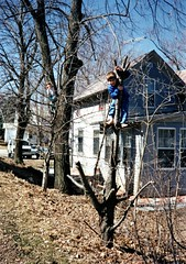 Deniz & Adem, tree climbers Wayne 1993 (ali eminov) Tags: trees boys children nebraska brothers wayne siblings deniz adem climbers treeclimbers