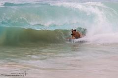 untitled-136.jpg (joshuamarumoto) Tags: ocean morning sea people dawn hawaii smash sand rocks surf waves oahu crash tube barrel pit dk curl aloha sandys bodyboard shorebreak pitted dropknee airdrop
