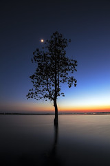 The Tree silhouette leaning over lake in Surin (Hinokami-Akira) Tags: ocean wood longexposure morning travel blue sunset sea vacation sky sun lake motion blur reflection tree beach nature water weather silhouette yellow clouds standing sunrise landscape outdoors island one evening bay coast movement twilight oak long exposure alone peace silent natural branches south charleston single environment dreamy botany tranquil isolated