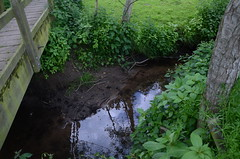 The Brook (Richard Ruane) Tags: bridge water cheshire brook