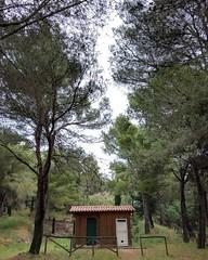 Exploring (Luquit) Tags: trees italy house woodland photography italia exploring sicily fotografia sicilia bosco scatti fotografare passioni discovering scoprire esplorare