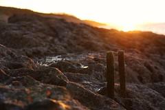Viejas sujeciones al mar. (Josu Salas) Tags: sunset costa verde atardecer mar oxido roca algas canon70d