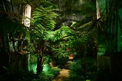 The Annex of the palms (larry_antwerp) Tags: brussels belgium belgi wintergarden brussel  wintertuin laken royalgarden         koninklijkeserre