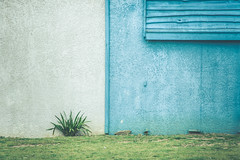 Nature urbaine (dono heneman) Tags: blue urban white house plant france green home nature grass wall architecture plante pentax bleu maison mur blanc gomtrie vegetal herbe urbain urbaine vgtation paysdelaloire loireatlantique portsaintpre vgtal pentaxart pentaxk3