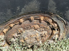 Wheel past its best.. (Jane.Des) Tags: texture abandoned rotting wheel hub wooden outdoor rusting derelict tyre